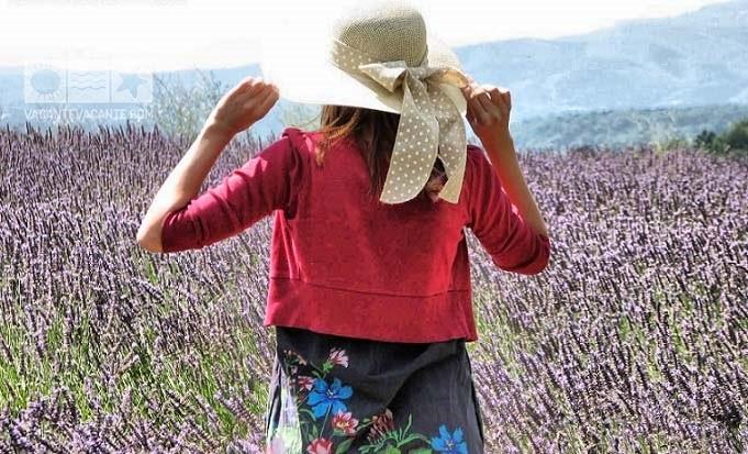 Doi ani în Provence (1)