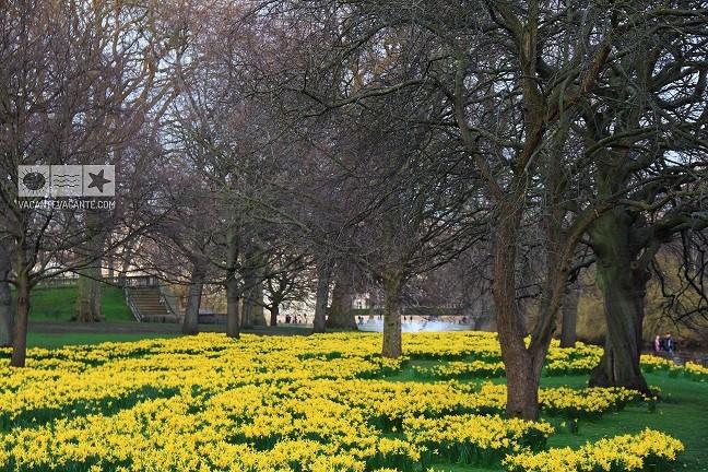 Primăvara la Londra: St James's Park