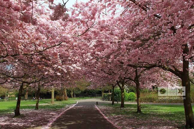 Jurnal de Londra(24): primăvară londoneză