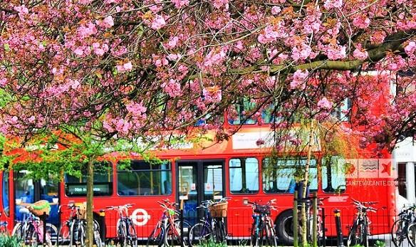 Londra in vremea ciresilor