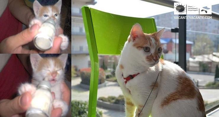 #Mikythecat