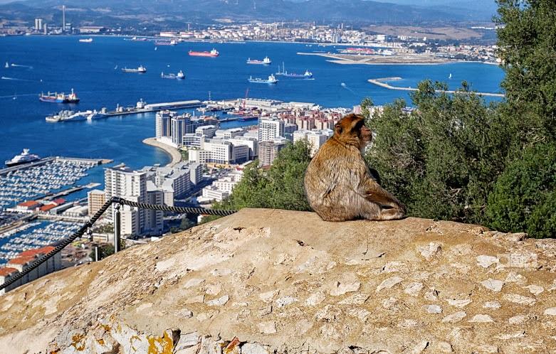 Gibraltar: după maimuțe