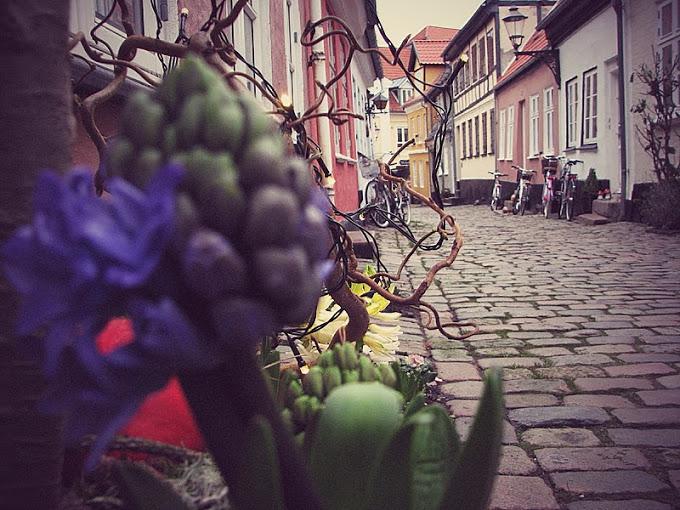 Prin Danemarca: Aalborg si Aarhus