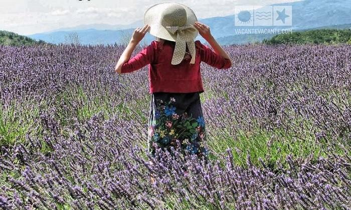 Doi ani în Provence (8)