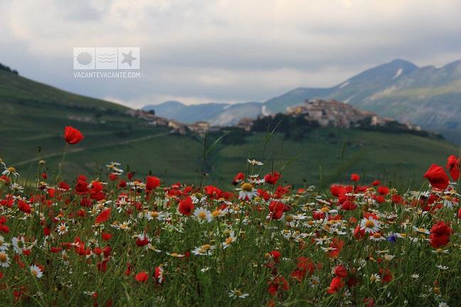 Castelluccio, poveste cu flori de câmp