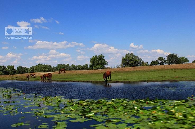 Direct din Delta Dunării