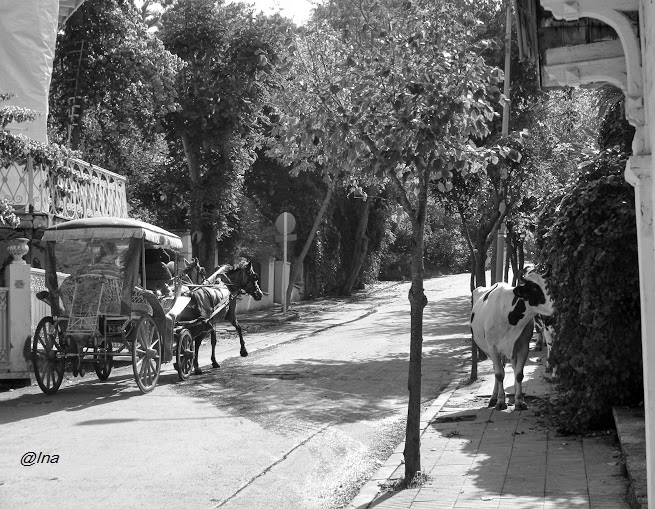 Buyukada, langa Istanbul