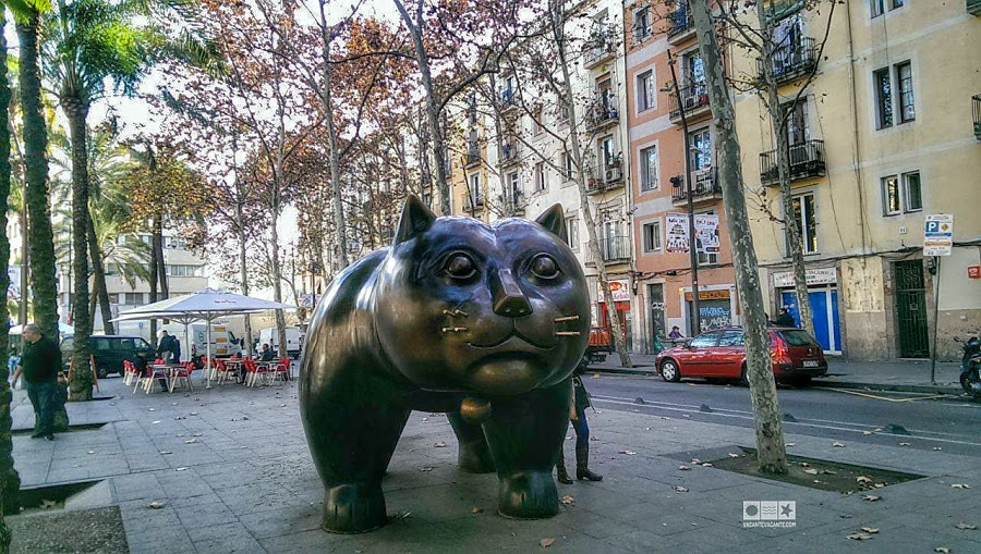 barcelona pisica